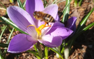 Już wiosna!